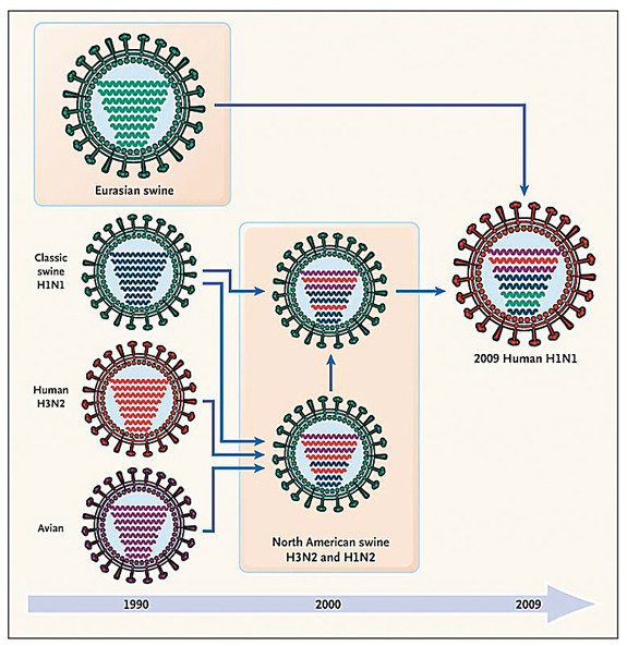 The history of reassortment events in the evolution of the 2009 influenza A (H1N1) virus
